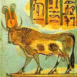 apis-bull